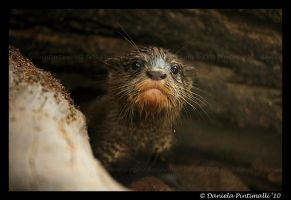Baby Otter III by TVD-Photography