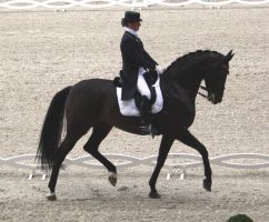 Dressage stock 15 by ByMelody