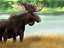 Moose by Astropteryx