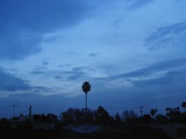 sky and palm by galad