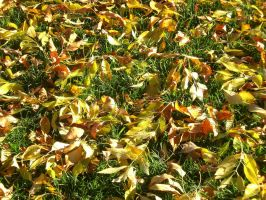 Leaves On The Grass by SN2