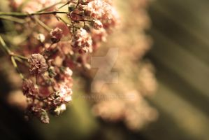 Pink flowers by Tinuviiel