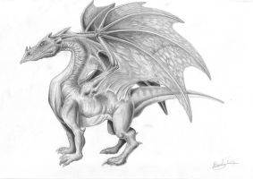 Dragon by Berilia