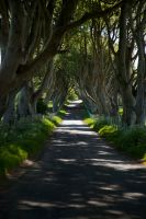 The dark hedges 2 by magikstock