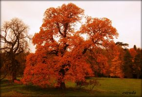 Autumn Fire by Estruda