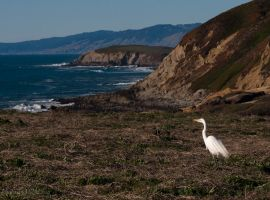Egret at the Coast by Kyndelfire