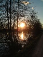 Sun in the threes by madko