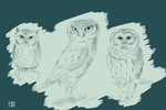 O, Ow and Owl by Eljudni