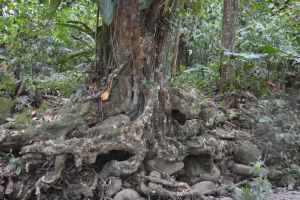Rocks in mimicry with roots by A1Z2E3R