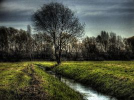 Rivertree by damagefilter