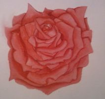 Water Color: Rose by ice-phoenix2