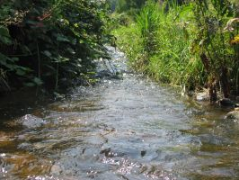 The river by Mayolijntje