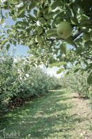 Walking in an Orchard by jnati