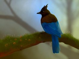 Steller's Jay by Paivatar