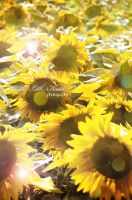 Sunflowers by Initio