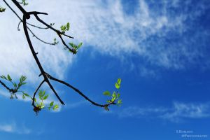 Branch... by ThyDeviant