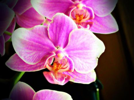 Orchids by TressaMarie2005