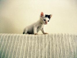 Conquering the world. by Catist