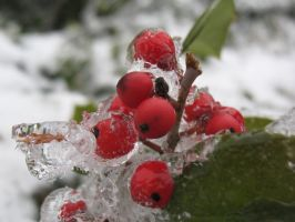 Iced Berries by GGRock70