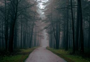 Mist in the Forest XIV by NorthernLand