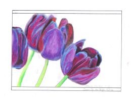 Queen of the Night Tulips by somechick73