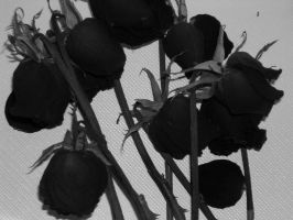 Black Roses by iLUSTblood