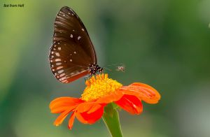 Butterfly, bee and flower by BatfromHell