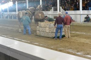Horse Weight Pulling Competition 4 by Miss-Tbones