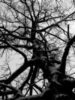 Tree of a life by RocknRollwoman