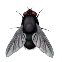 Vector fly . by Tpose