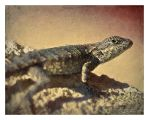 Eastern Fence Lizard II by eccoarts