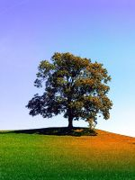 Posing tree on a hill in summertime by patrickjobst