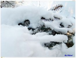 Frozen snow... by piticus41