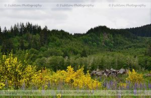 A Story of Flowers and Trees by FicktionPhotography