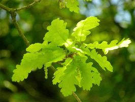 Leaves by Agatje