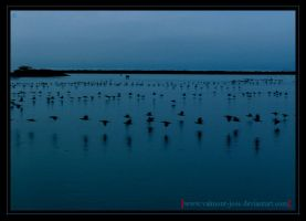 R. ducks line by Valmont-jose