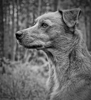 Charlie Profile by DogBoy74