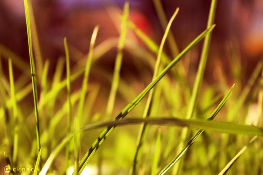 Lost in the grass by DionisDei