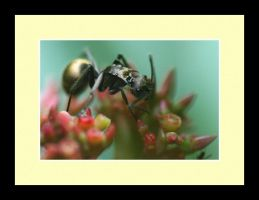 Ant Photo 5 by blookz