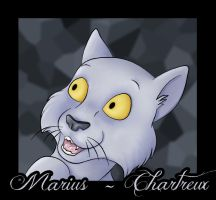 Marius the Chartreux Cat by Jedi-Sentinel