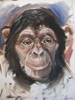 Chimp by JP-palmer