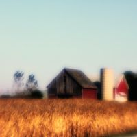 Harvest Time Looms by pubculture
