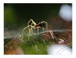 Spider With Supper by albatros1