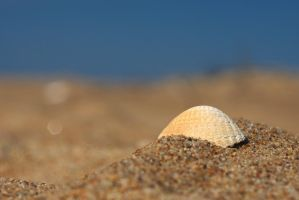 Beached shell by perost