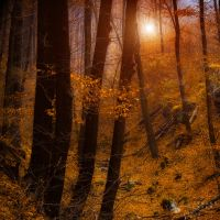 golden time by ildiko-neer