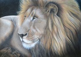 African Lion by rlcreatif