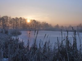 Reeds and ice by starykocur