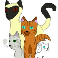 my warrior cats by Soviet-Union-Russia