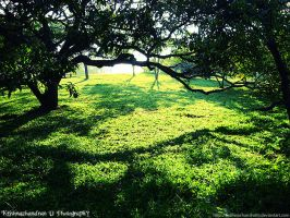 Over the Greens by krishnachandranu