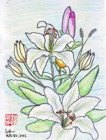 Lilies in Color by lennerose